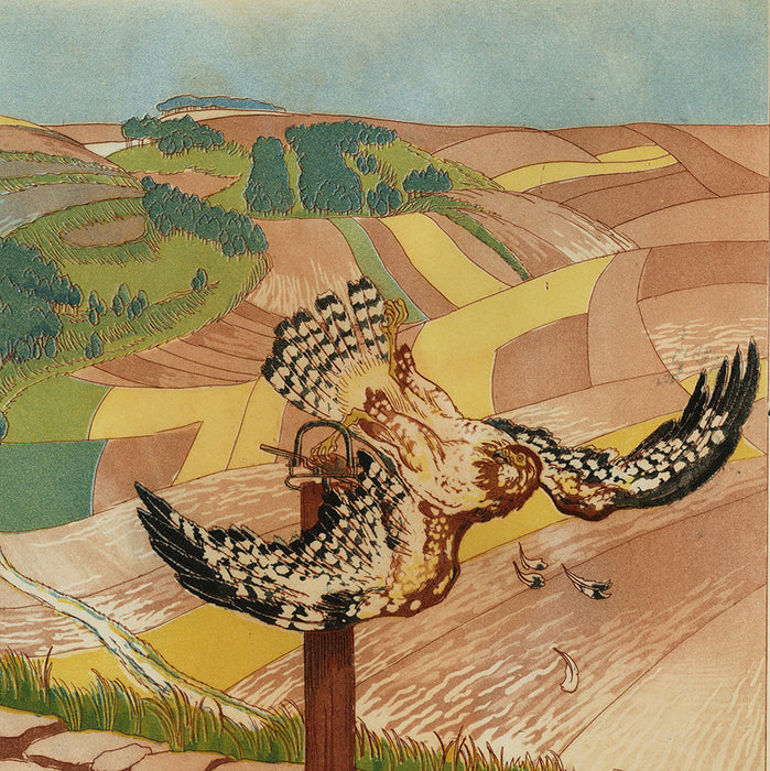 Maurice Taquoy - Buse Prise au Piege - Trapped Buzzard - feathers - detail