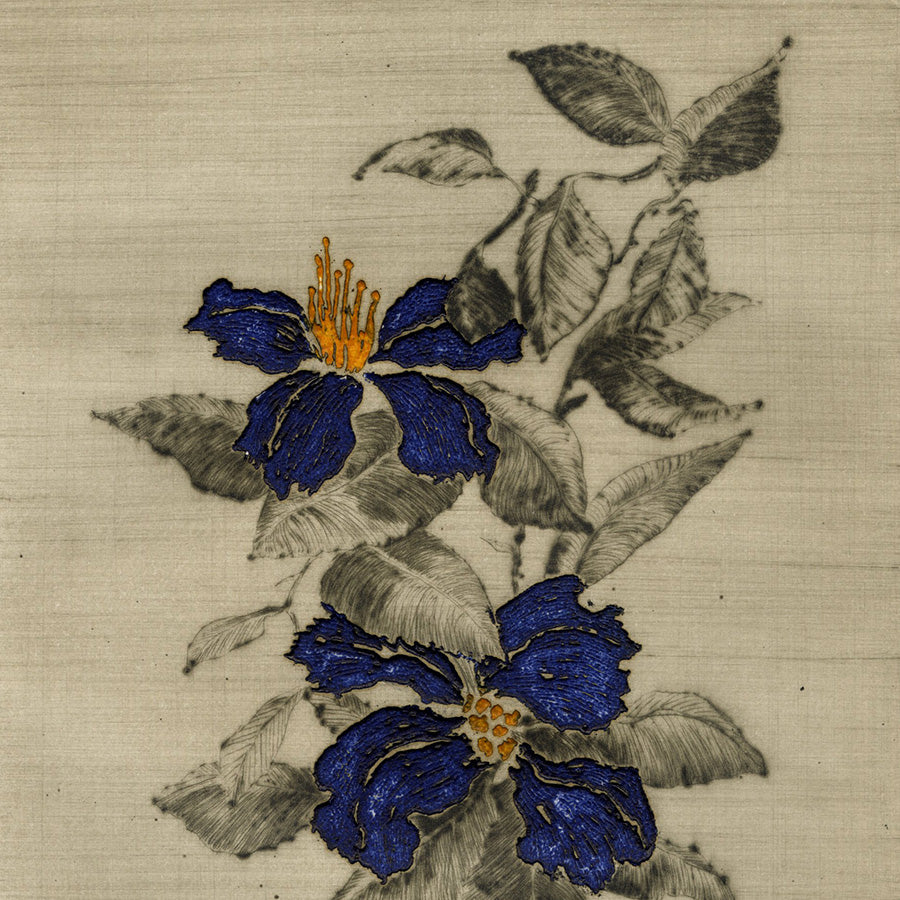 Yannick Ballif - Clematite - Clematis - vine plans flowering - deep royal blue - detail