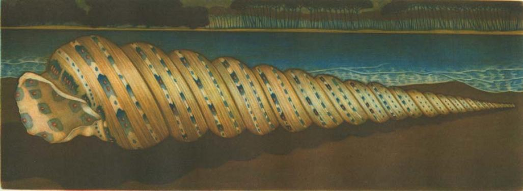 Color mezzotint - by Estebe, Michel - titled: Shell with Blue Dots