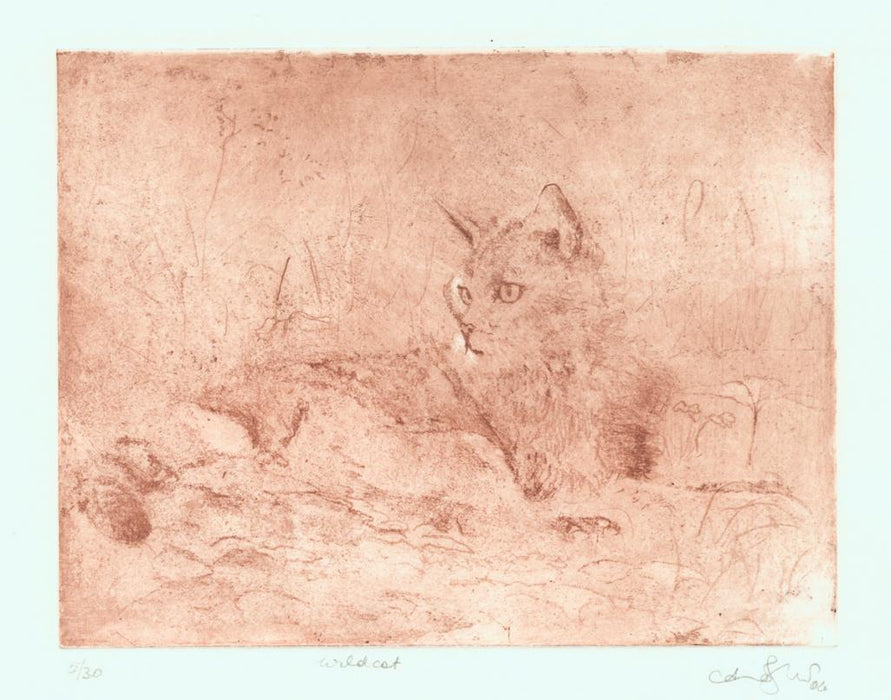 Aquatint - by JERETIC, Anna - titled: Wildcat