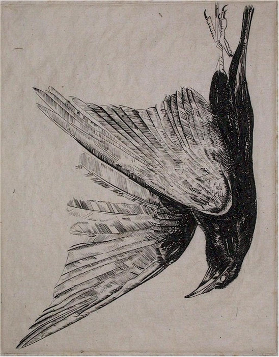 Engraving - by HECHT, Joseph - titled: Corbeau