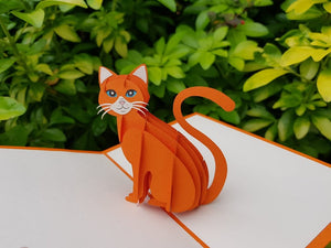 Pussy cat (Orange)