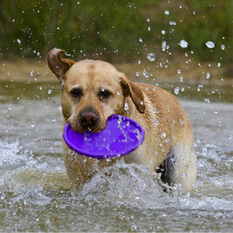 Floating Dog Frisbee, Puppy Toy