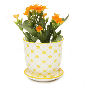 Yellow Stars Planter & Saucer