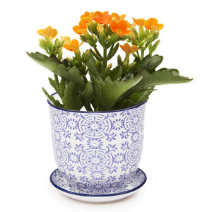 Blue Lace Planter & Saucer