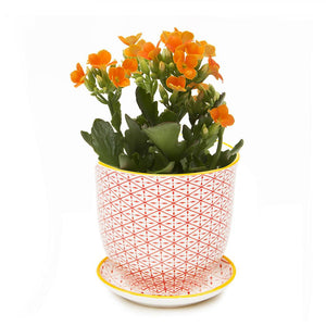Red Diamonds Planter & Saucer