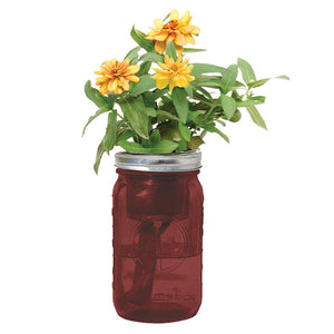 Zinnia Hydroponic Grow Kit