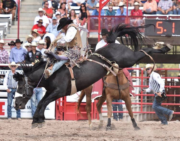 Is Your City Next To Ban Rodeos