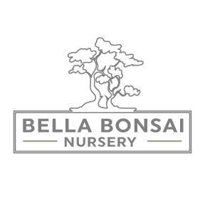 Hinoki' - Falsecypress Bonsai Tree