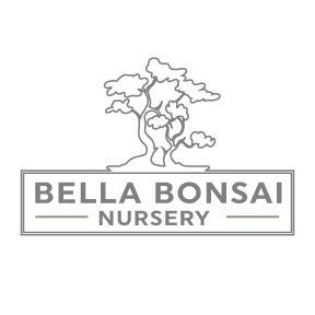 Japanese Zelkova Bonsai Tree 1