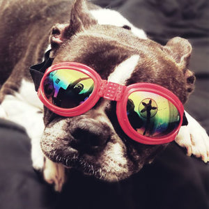 Doggles! 6 colours
