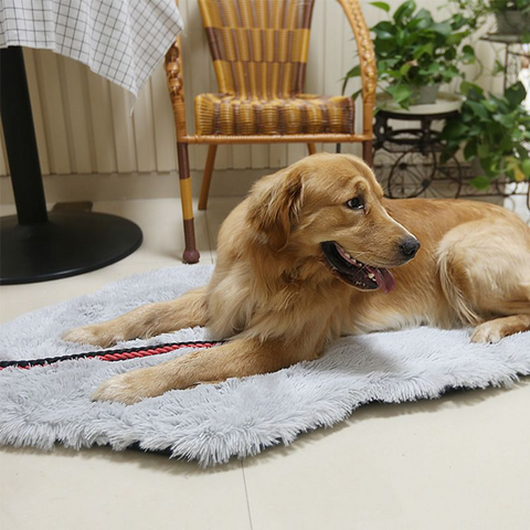 Image of Orthopedic Dog Bed Memory Foam