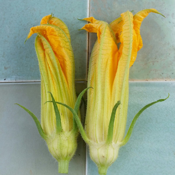 Squash - Blossoms [15ct]