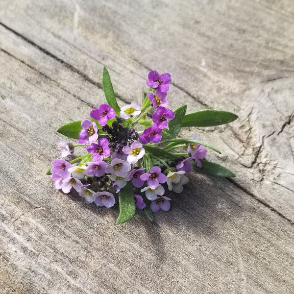 Alyssum - Purple, Flowers [100 ct.]