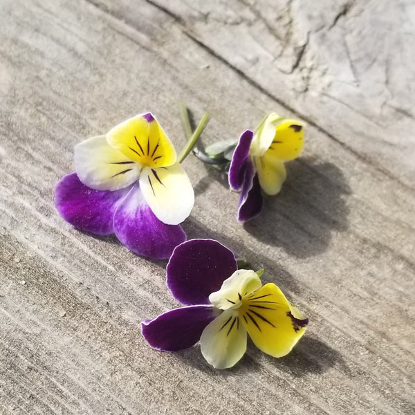 Viola - Tri-color Flowers [100 ct.]