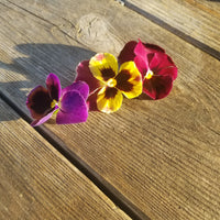 Pansy, Flowers, [100ct.]