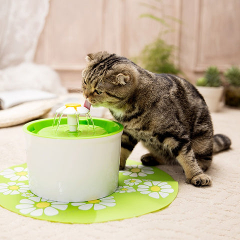 The Pet Fountain