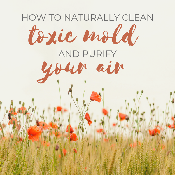 How to naturally clean toxic mold and keep your air pure