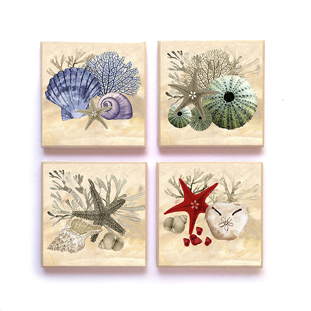 Coasters NATURAL SHELLS Seaside