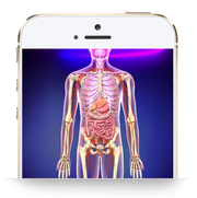 3D Body Viewer: Genius In-app purchase - INSIGHT HEALTH APPS