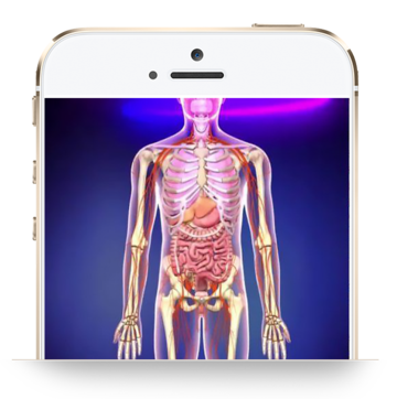 Life Insights 3D Graphics Package - INSIGHT HEALTH APPS