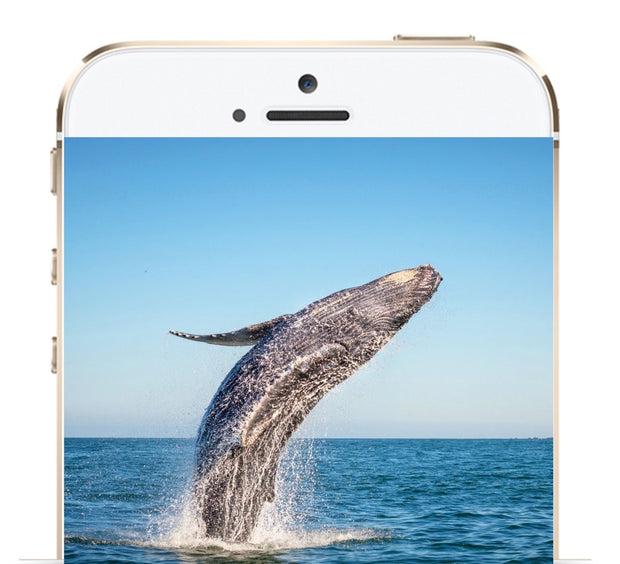Custom Libraries: Genius Insight: Whale Medicine - INSIGHT HEALTH APPS