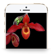 Customized Library: Genius Insight: Living Tree Orchid Essences