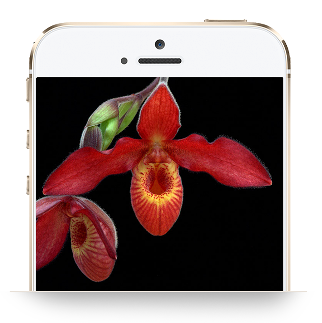 Customized Library: Genius Insight: Living Tree Orchid Essences - INSIGHT HEALTH APPS