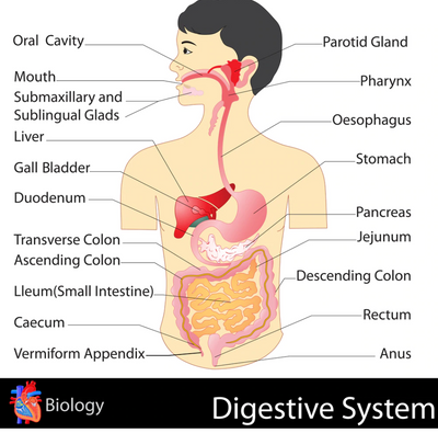 Digestive Wellness Pack - INSIGHT HEALTH APPS