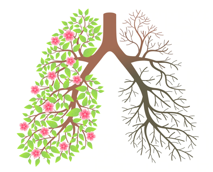 Respiratory Series - Harmonize Lung infections and more - INSIGHT HEALTH APPS