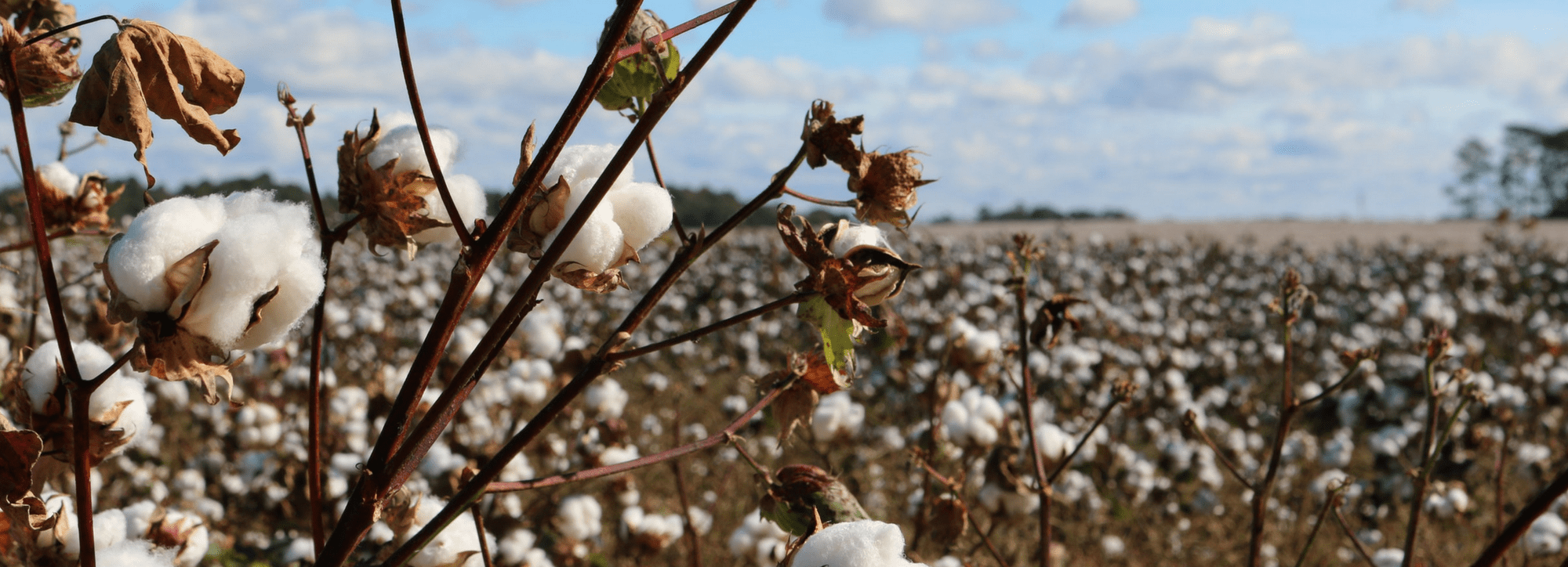 World Water Day: The True Cost of Conventional Cotton
