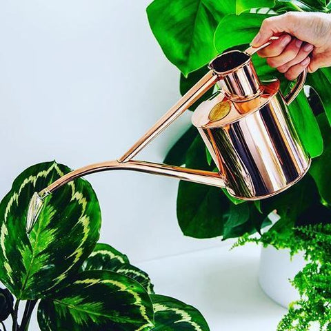 Indoor Copper Watering Can