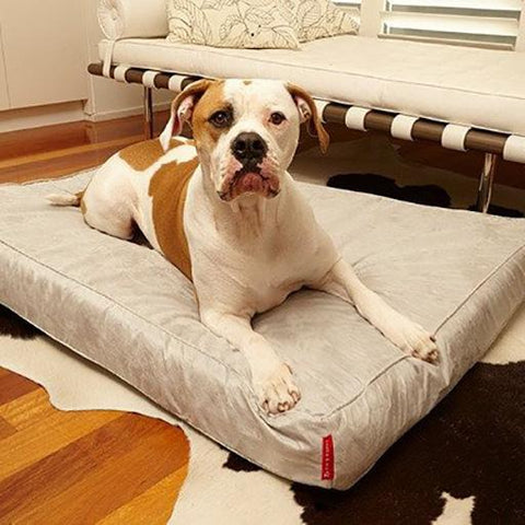Velluto Bed, Dog
