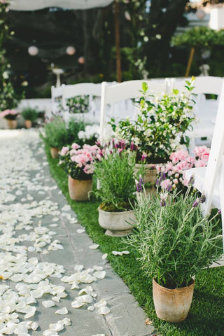 Potted Plant - Wedding Isle