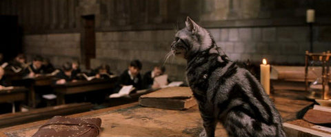 chat mac gonagall