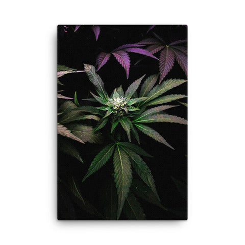 Bud 2 - Canvas - Herban Apparel