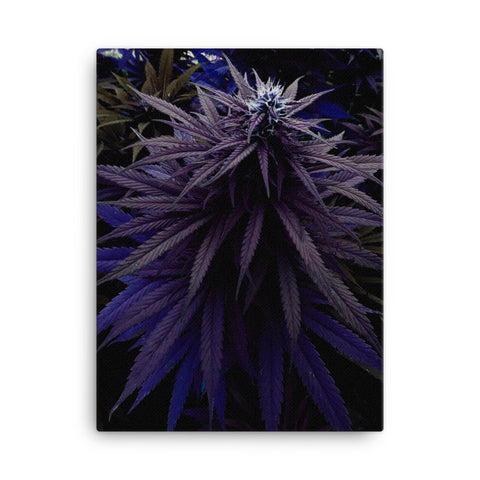 Bud 4 - Canvas - Herban Apparel
