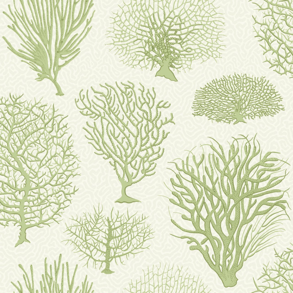 Cole and Son Wallpapers Curio Seafern Green Trees Wallpaper