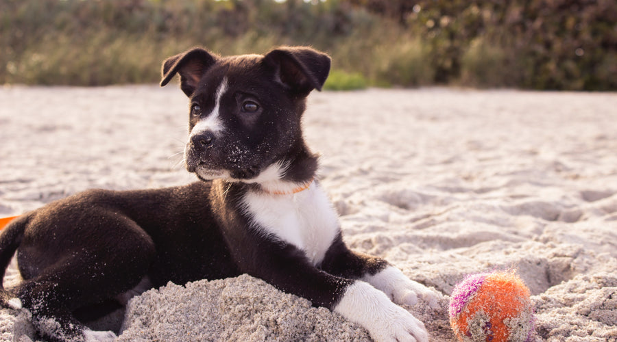 San Francisco's Sandy Retreats for Your Pup
