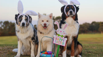 dogs dressed as easter bunnies with an easter basket, easter eggs, and Happy Easter sign