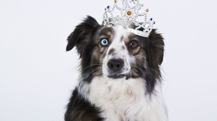 6 Practical Ways to Treat Your Dog like Royalty