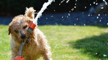 Keeping Your Dog Cool This Summer