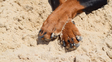Dog paws on beach