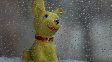 dog toy in the rain