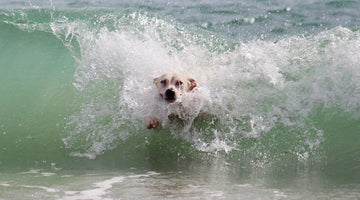 9 Hot Tips for a Safe Day at the Beach with Fido