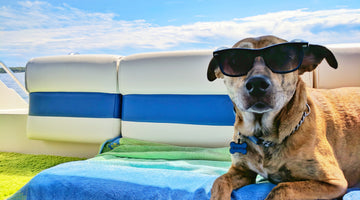 9 Pool Safety Tips for Dogs