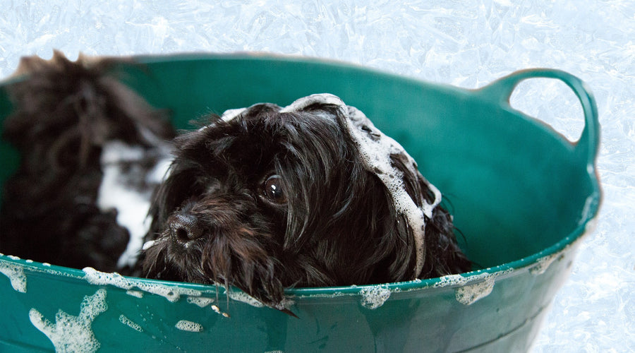 6 Ways to Keep Your Dog Smelling Fresh Between Baths