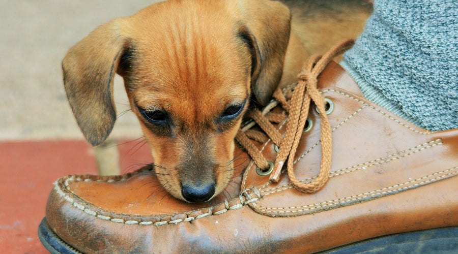 7 Tips To Stop Your Dog From Chewing Things You'll Wish You Knew Sooner