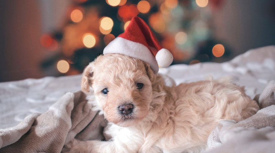 How to Give Your Dog the Most Extra Christmas