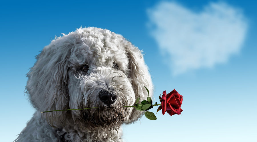 8 Signs Your Dog Loves You